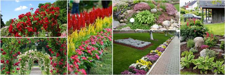 Разнообразие цветочных клумб во дворе