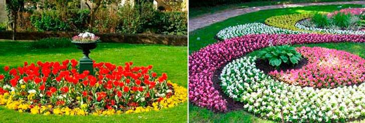 Подбор цветов для красивой клумбы