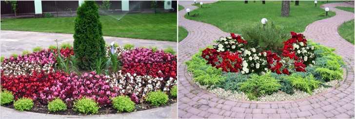 Выбор цветов для садовой клумбы